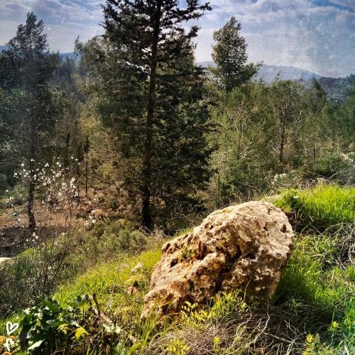 barukh-jeruzsalemi-hegyek-izraeli-taj-10