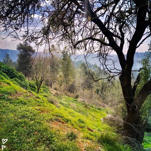 barukh-jeruzsalemi-hegyek-izraeli-taj-2