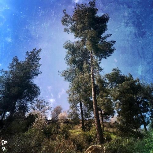 barukh-jeruzsalemi-hegyek-izraeli-taj-4