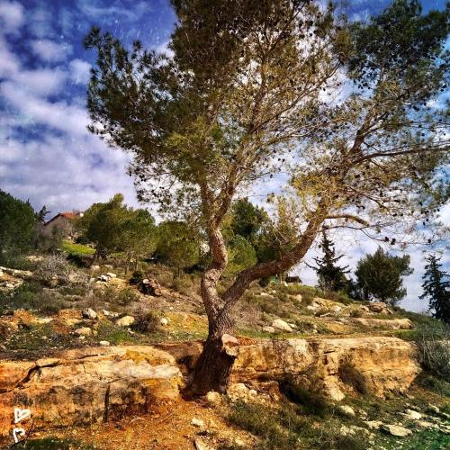 barukh-jeruzsalemi-hegyek-izraeli-taj-8
