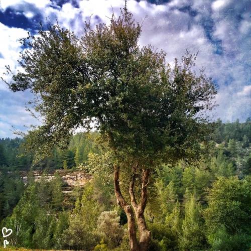 barukh-jeruzsalemi-hegyek-izraeli-taj
