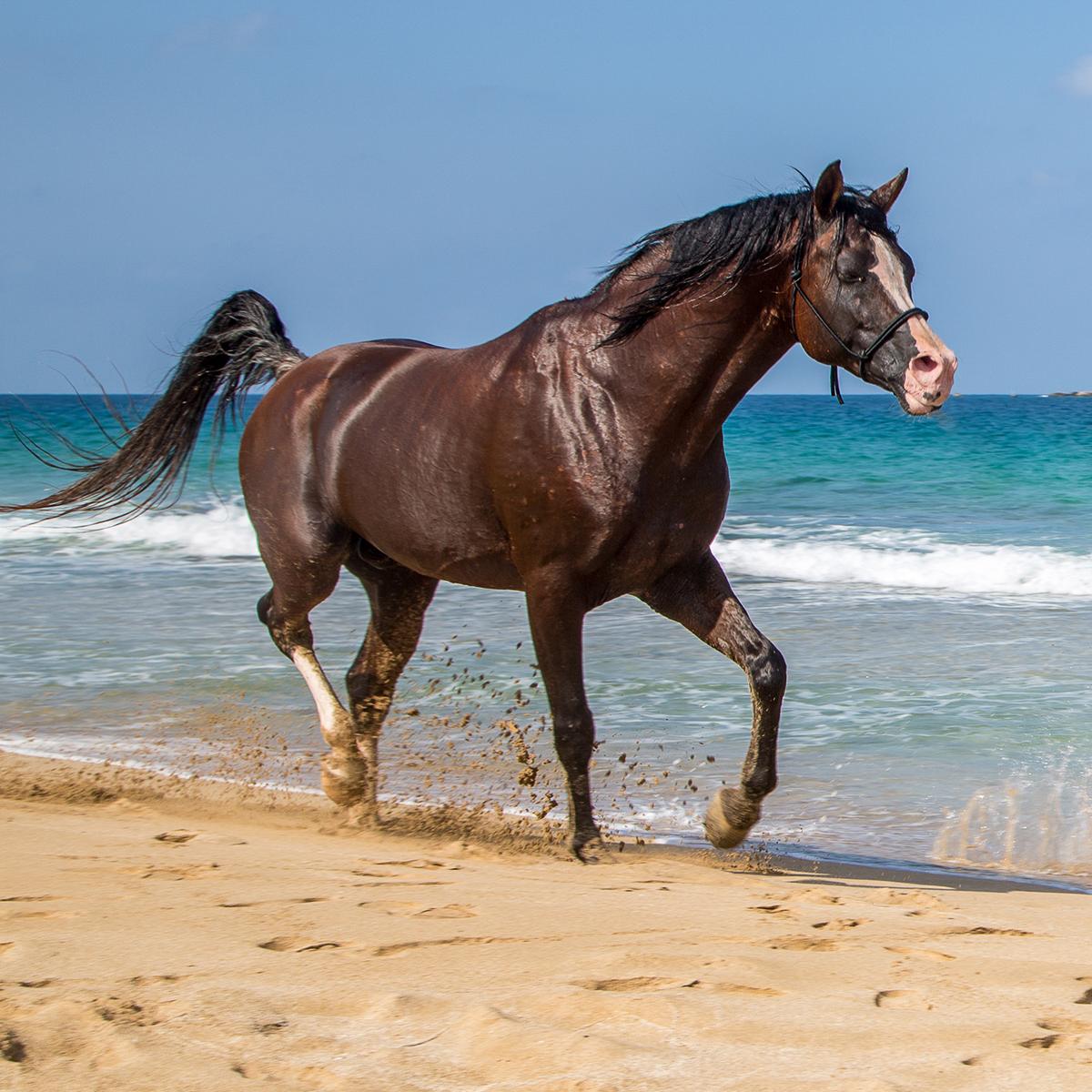 Izraeli tengerparton vágtató ló