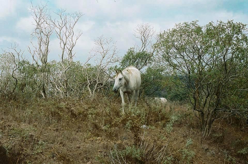 Ló a Golán-fennsíkon
