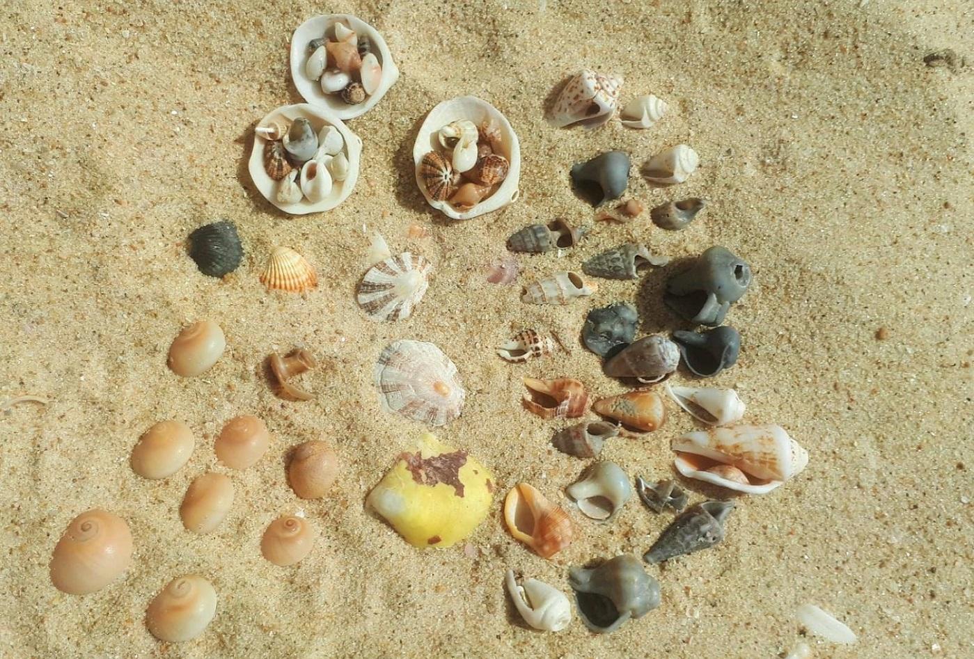 szines-kagylok-homok-tengerpart