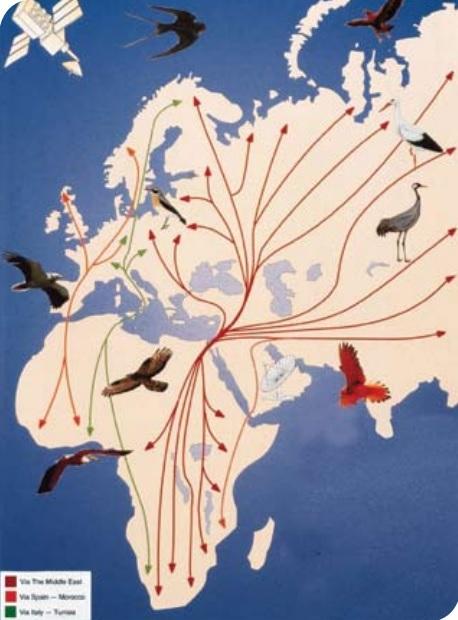 Izrael három földrész kereszteződése - illusztráció: Izraeli Ornitológus Portál