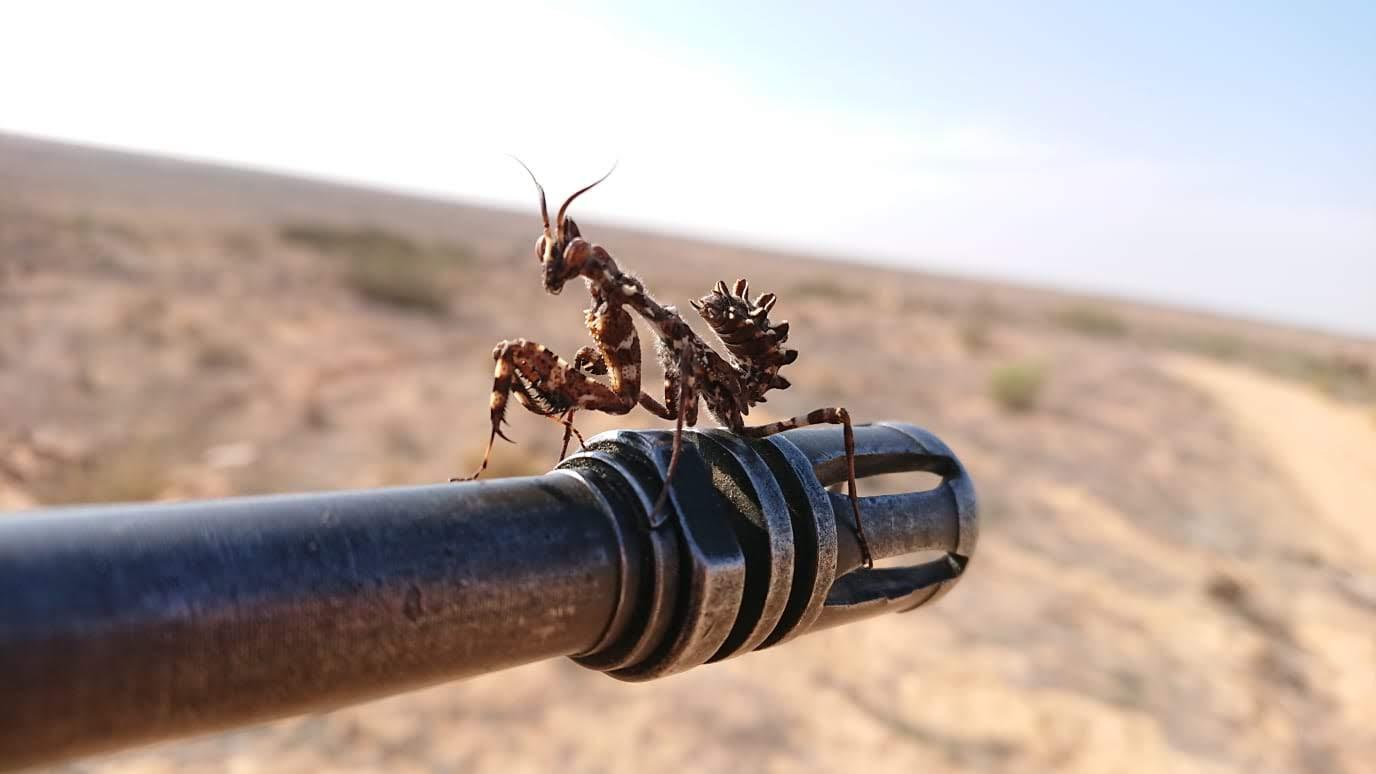 tartalekos szolgalat sivatag imadkozo saska