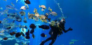 buvar halakat korall-vilagi viz alatti akvarium