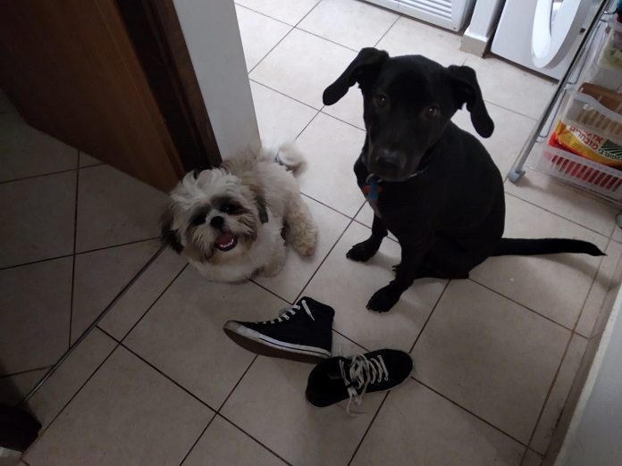 kutyak