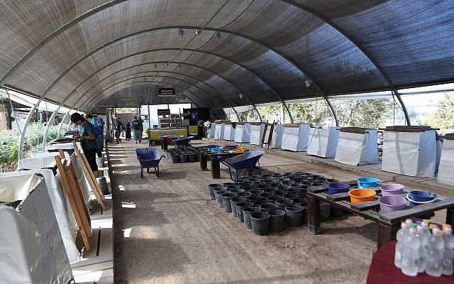 Dávid Városának szitálási projektje Jeruzsálemben, Emek Tzurimban - fotó: Moshe Mangan / Dávid Városa