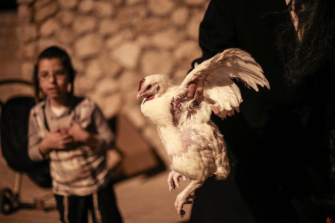 Jom Kippuri kakaspörgetés - fotó: Shutterstock