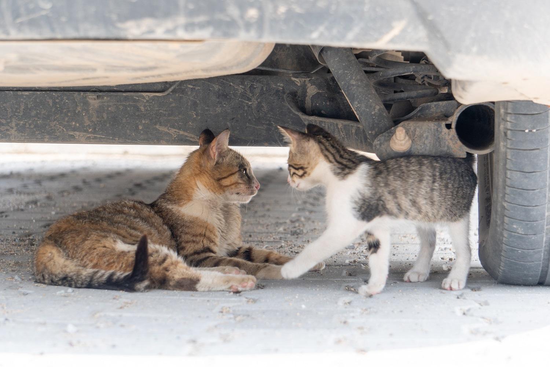Levél az állatságról és az emberségről