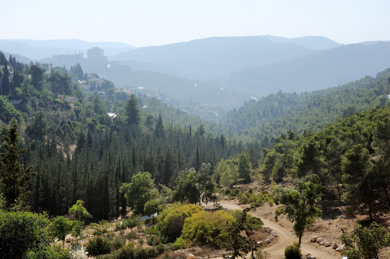 Erdei szépségverseny: Izrael a nemzet kedvenc fáját keresi – famonológok